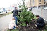 Озеленением города займутся молодожены
