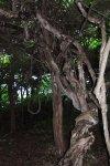 Таинственный лес на острове Петрова