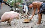 Свинья о двух ногах
