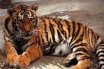 Китай защитит тигра