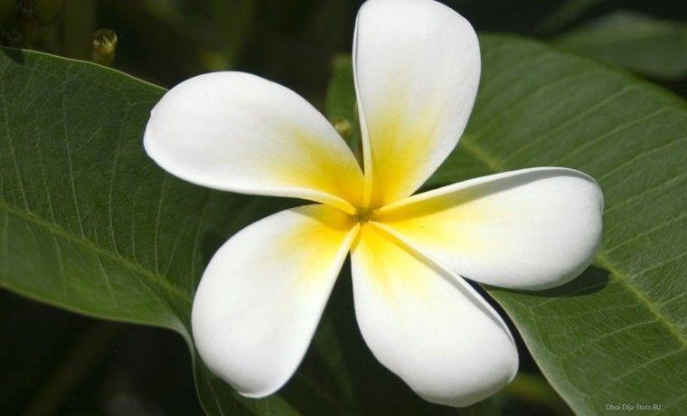 Когда акция белый цветок