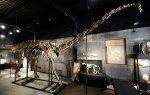 В Великобритании на акуционе продали самый полный скелет динозавра