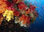 Ученые решительно настроены спасти кораллы Большого Барьерного рифа от гибели