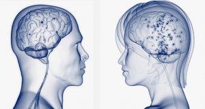 Ученые: Мужской и женский мозг ведут себя по-разному
