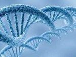 Ученые расшифровали геном финиковой пальмы