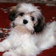 Ученые доказали, что собаки могут узнавать знакомых на фотографиях