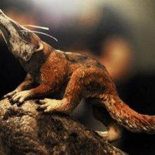В Бельгии нашли останки древнейшего хищника на планете