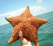 Эксперты: Морские звезды помогают человеку избежать инсульта