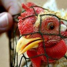 Роспотребнадзор вновь предупредил туристов о птичьем гриппе