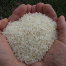 Крым может прекратить выращивать рис из-за нехватки воды