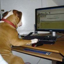 18% американцев хотели приобщить своих домашних животных к Skype - СМИ