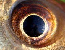 Древнейшие рыбы имели большие глаза