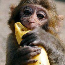 В США создали полезные бананы для африканских детей