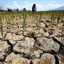 Засуха в КНДР может стать самой продолжительной со времен 2001 года