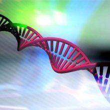 ГМО-дети могут появиться в Британии через два года