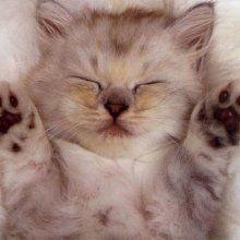 Кошки способны снижать давление и продлевать жизнь мужчинам
