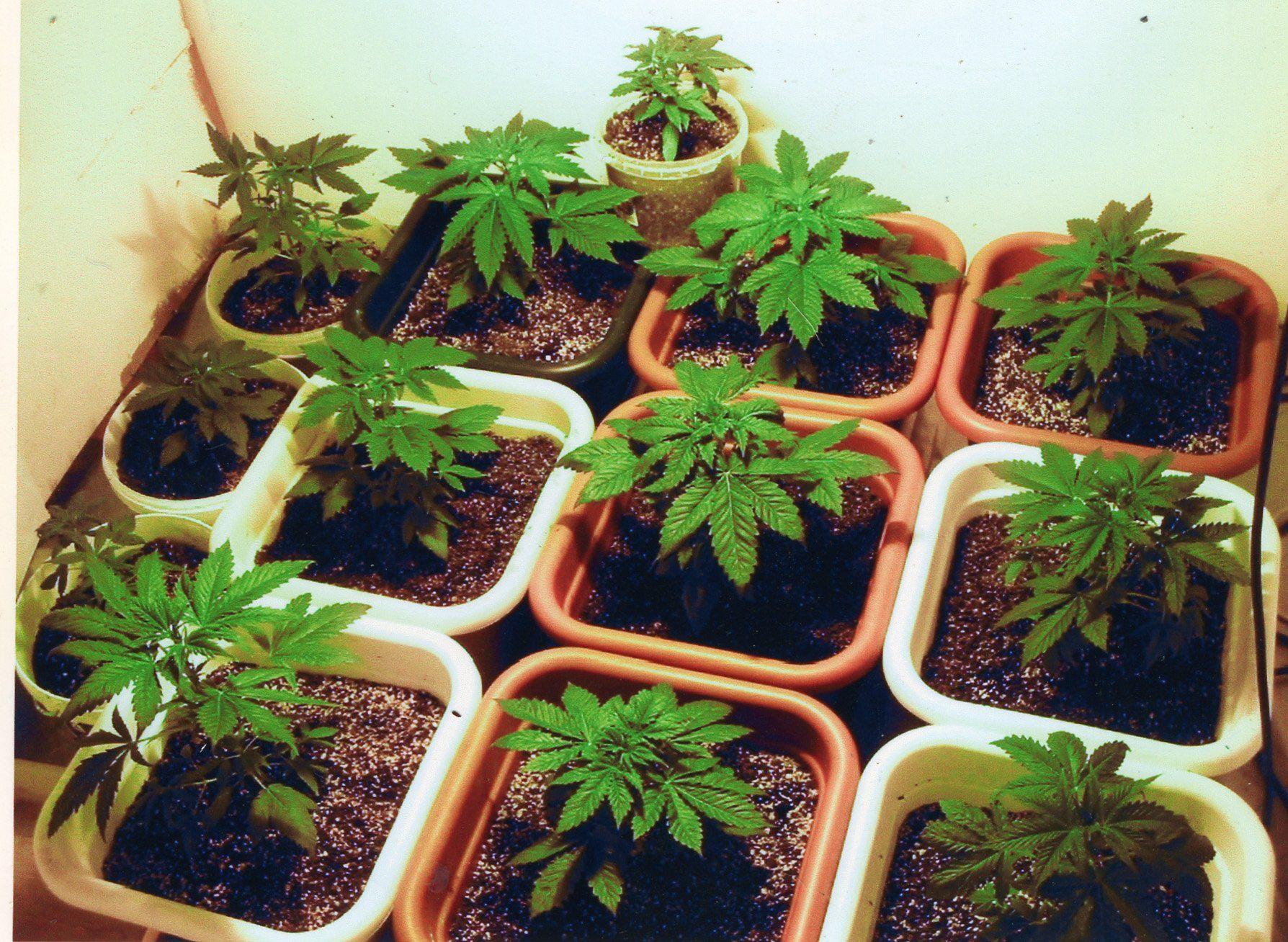 Как выращивать травку в домашних условиях