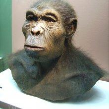 Ученые США отодвинули эволюцию человека на миллион лет