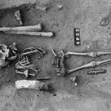 Археологи: во Франции найден древнейший скелет ребенка с синдромом Дауна