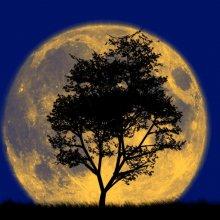 Астрономы: 11 августа ночное небо Земли украсит «сверхлуна»