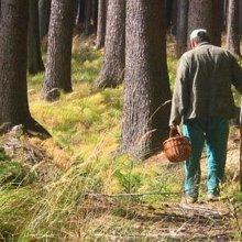 Заблудившегося в лесах у Ропши грибника спасатели искали четыре часа