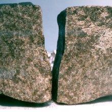 В марсианском метеорите ученые нашли загадочное клеточное соединение