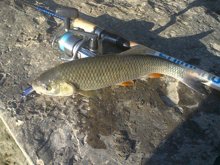 видео рыбалка на реке или