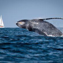 Ученые обнаружили на дне Тихого океана новые формы жизни