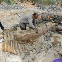 Ученые: найден скелет одного из самых крупных динозавров