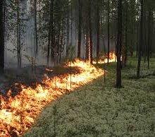 В Геленджике горит около 5 га лесной подстилки