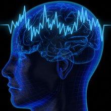 Учеными найдена область мозга, отвечающая за рискованное поведение