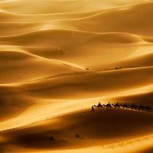 Ученые предложили новую версию образования пустыни Сахара