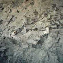 СМИ: В Мексике найдено самое большое кладбище динозавров