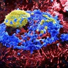 В Египте от птичьего гриппа скончалась третья женщина за ноябрь