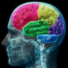 Учёные: Человеческий мозг стареет быстрее из-за стрессов