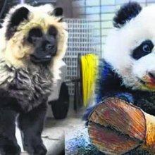 """""""Загримированных"""" собак с фальшивыми паспортами в цирке Италии выдавали за панд"""