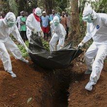 ВОЗ: Жертвами Эболы уже стали 7 588 человек