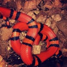 Житель Санкт-Петербурга потерял в городе тропическую змею