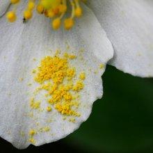 Ученые выяснили, что на майские дожди влияет пыльца растений