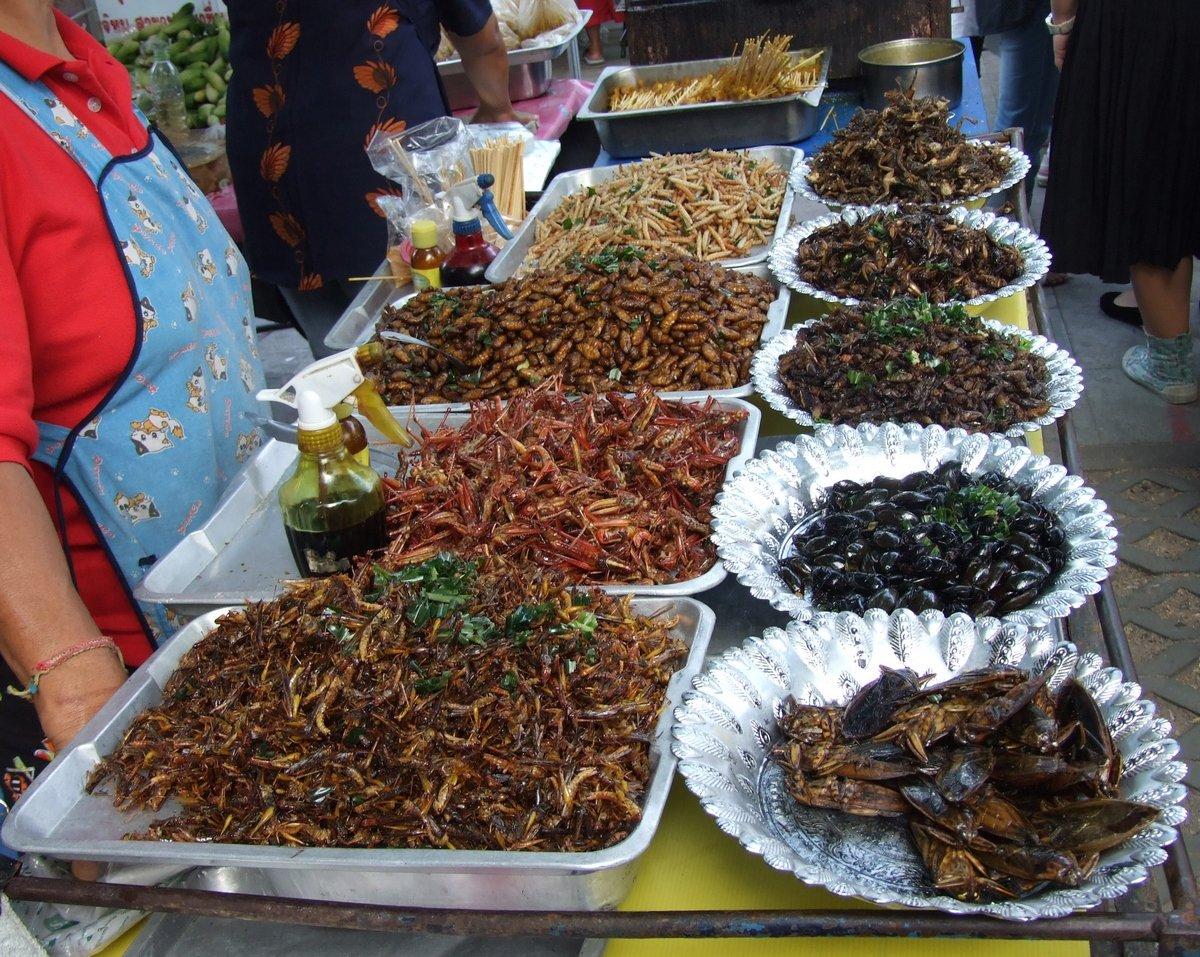 Ученые: Уровень белка ворганизме можно поднять поедая жуков