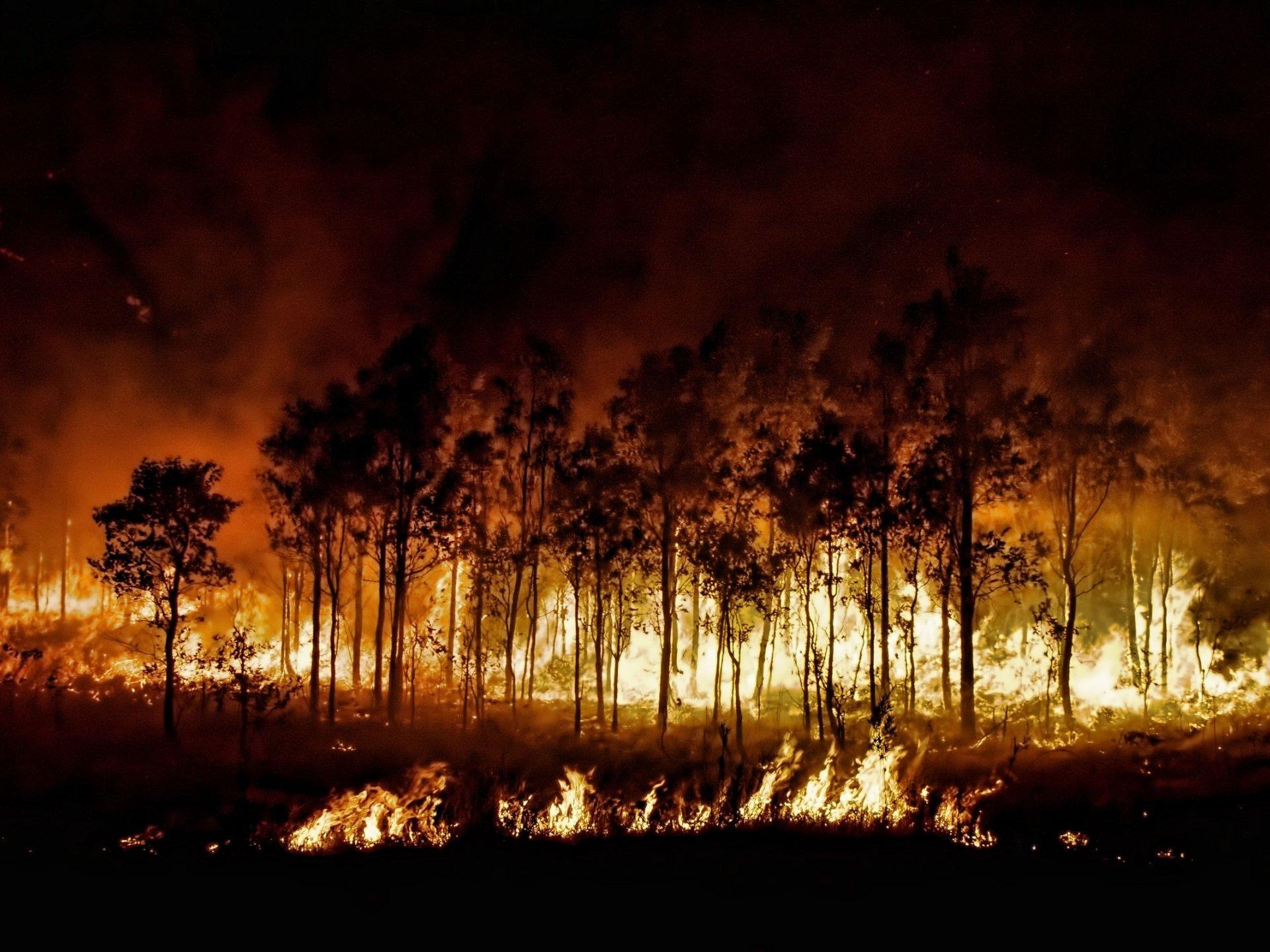 картинки лесов в огне этой