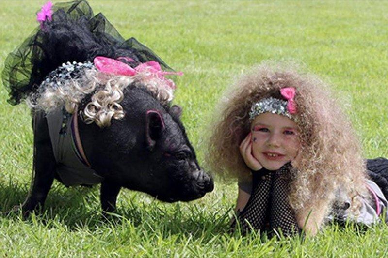 Конкурс красоты для животных