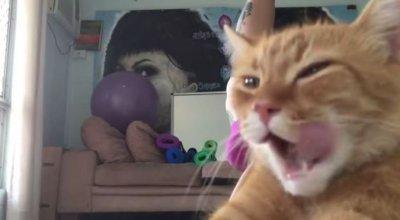 Наглый кот испортил своей хозяйке видео про йогу и покорил Интернет