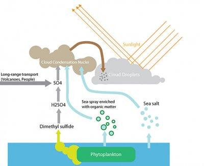 фитопланктон для толстолобика