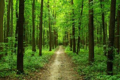 В Нижегородском лесу пропала 89-летняя старушка