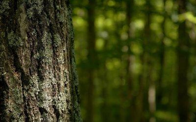 В Карелии в лесу найден обгрызанный труп пропавшей женщины
