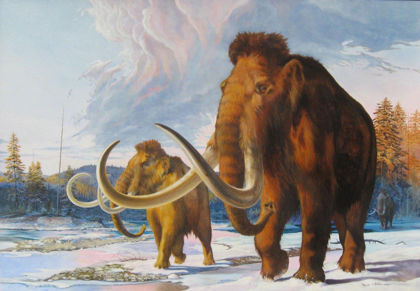 картинка мамонта и древнего человека еще музейным делом