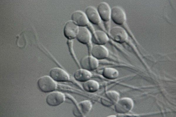 kak-virabativat-spermu