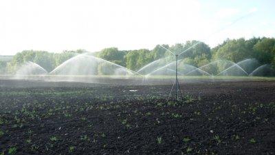 Ученые ВГУ разработали «твердую воду» для борьбы с засухой