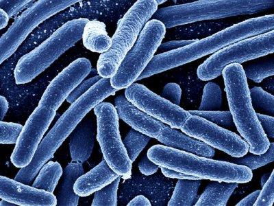 В Великобритании обнаружены бактерии, устойчивые к колистину